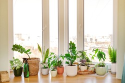 Home plants and flowers on a wooden windowsill