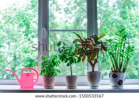 Home plants in flowerpots and a watering can on the windowsill in the room