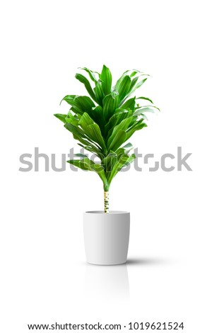 Home potted plant isolated over white background - Shutterstock ID 1019621524