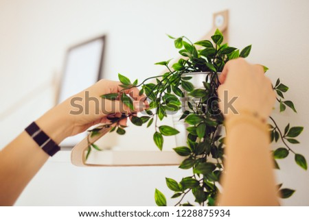 Home Staging - home stager sets up a white apartment with a plant #1228875934