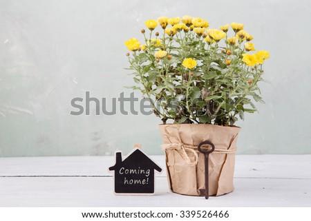 Home sweet home - beautiful  flowers in pot with blackboard