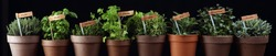 Homegrown and aromatic herbs in old clay pots. Set of culinary herbs. Green growing sage, oregano, thyme, savory, mint and oregano with labels
