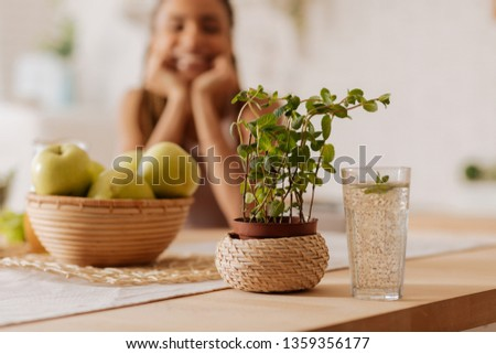 Homegrown mint. Close up of homegrown mint standing near the glass of water and bowl with apples