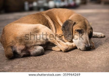 Homeless abandoned brown dog sleeping on the street #359964269