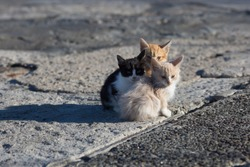 Homeless animals. Group homeless kittens on concrete pier in sea port