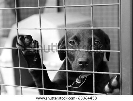 Homeless animals series. Black mongrel dog looking out through the wire of his cage. Black and white image