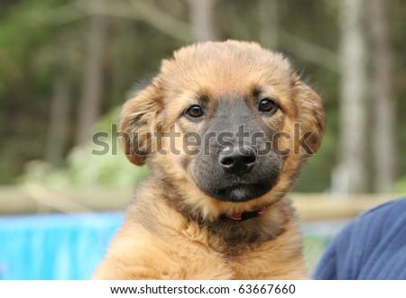 Homeless animals series. Cute mongrel pup looking at the camera. Animal pens in the background.