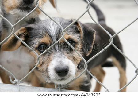 Homeless animals series. Cute pup looking out through the wire mesh of his pen.