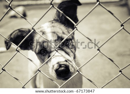 Homeless animals series. Pup looking out from behind the wires of his cage. Cross toned black and white image