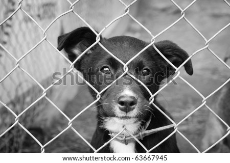 Homeless animals series. Sad pup looking out from his pen. Black and white image.
