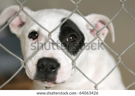 Homeless animals series. Sad white and black pup looking out through the wire mesh of her pen