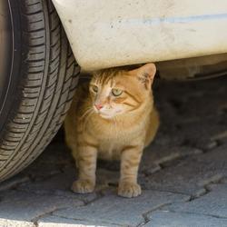 Homeless cat.