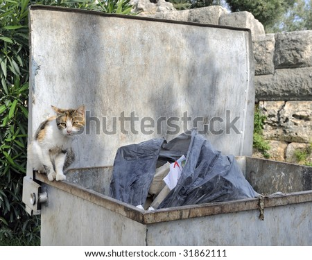 Homeless cat scavenging food on dumpster
