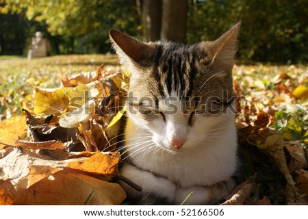 homeless cat sleeping in a heap of leaves on an autumn sunny day