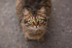 Homeless Cat with green eyes sitting outdoor. Homeless animals. Concept help Homeless Cats