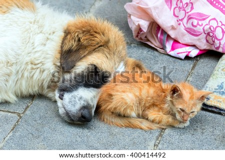 Homeless dog and kitten sleeping on a stone background