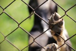 Homeless dog behind bars. Dog shelter.