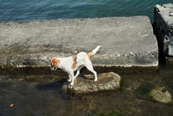 Homeless dog fishing in the sea. Hungry dog gets his own food.