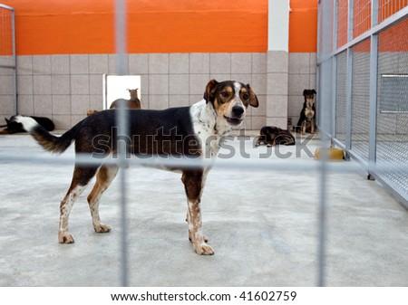 homeless dog in a shelter behind bars, looking at camera