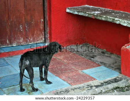 Homeless dog in colorful environment