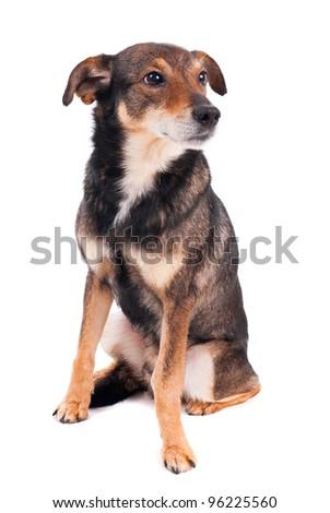 Homeless dog on white background
