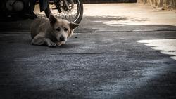 Homeless dog staring suspiciously at the camera.
