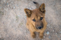 Homeless dog,  Vagrant dog sitting outside watching staring at camera. The dog looking at camera of starveling puppy appeal a signal 'Do you have some food for me?' from this eyes. Stray dog