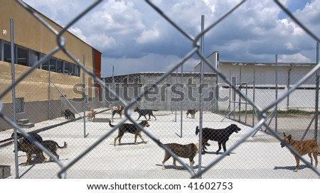 homeless dogs behind fence outside, in a shelter