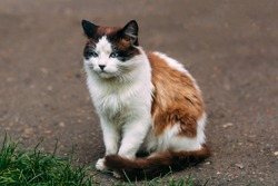 Homeless grimy white cat portrait. A beautiful cat with blue eyes. Animals are homeless. Small depth of field.