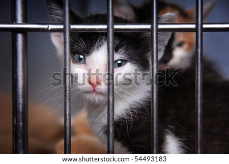 Homeless Kitten in a Cage