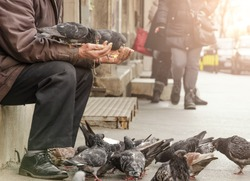 homeless man sitting on the street and feed the pigeons from hands