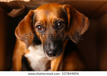 Homeless Mixed Breed Dog Looking Sad in Cardboard Shelter
