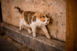 homeless mongrel multicolored cat walks along the wall. Mongrel cat, homeless animal. Concept of stray cats