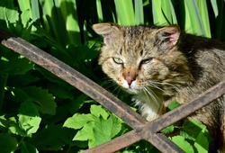 homeless old cat sits in green grass behind a metal fence