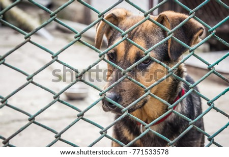 Homeless puppy in an animal shelter #771533578