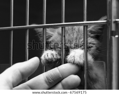 Homeless sick cat in a cage