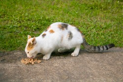 Homeless spotted cat eats food on the street. Cat and food on the road.