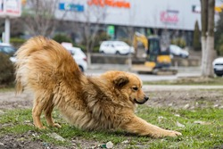 Homeless stray dog on blurred background of urban environment. Actual problem in different countries of the world