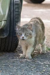 Homeless, street cat on the hunt