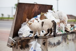 Homeless street hungry cat finding food in the rubbish