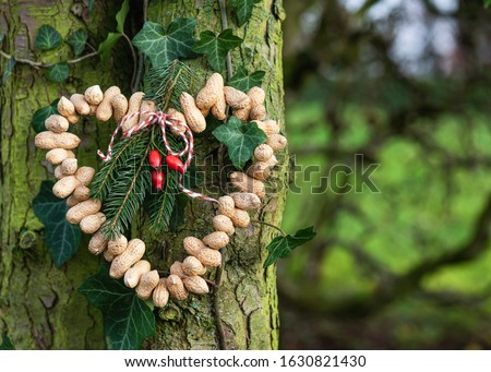 Homemade heart shaped birds feeder made from organic peanuts hanging in the garden. Feeding the birds in winter. Copy space. stock photo