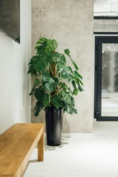 Homemade plant in a vase in a modern large room