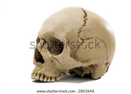 Homo sapience cranium isolated on white background