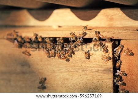 Honey bee Foto stock ©