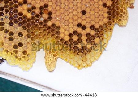 Honey Bee brood with Queen cells