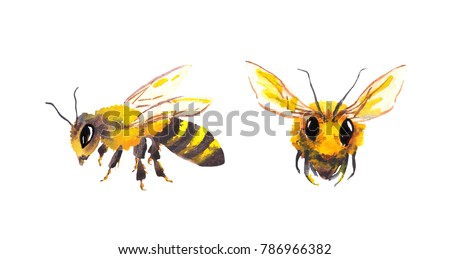 Honey bee insects. Watercolor isolated on white