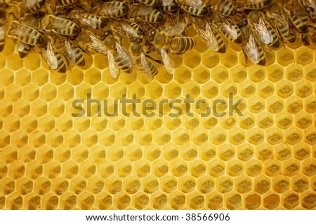 Honey Bees border