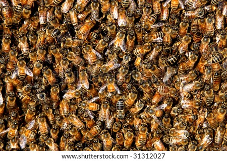 honey bees in a swarm make a hive background