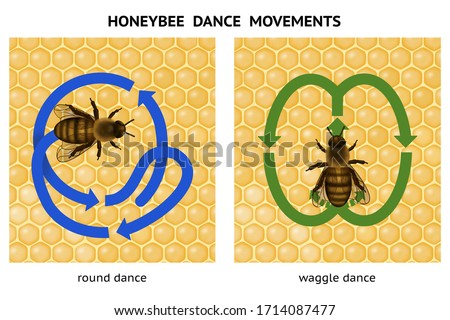 Honeybee dance movements. Honeybee dance language.  Dance language is used by an individual worker to communicate to one or more other workers. Round and waggle dance