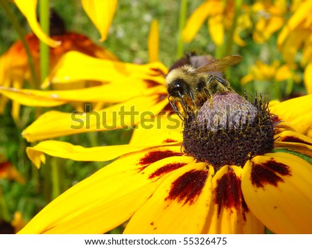 Honeybee on Yellow Flower in Garden